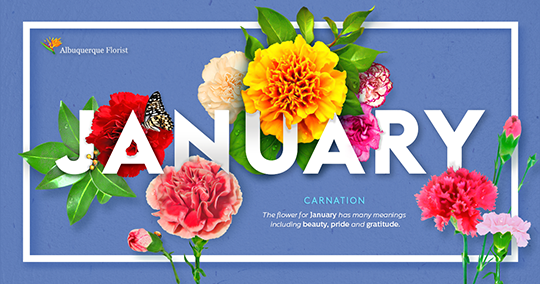 January Flower Images